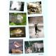 Chasses photographiques d'antan