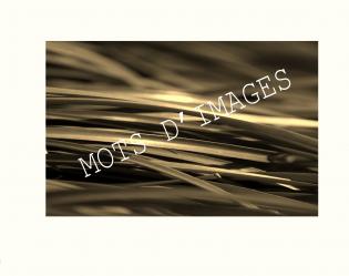 MOTS D'IMAGES