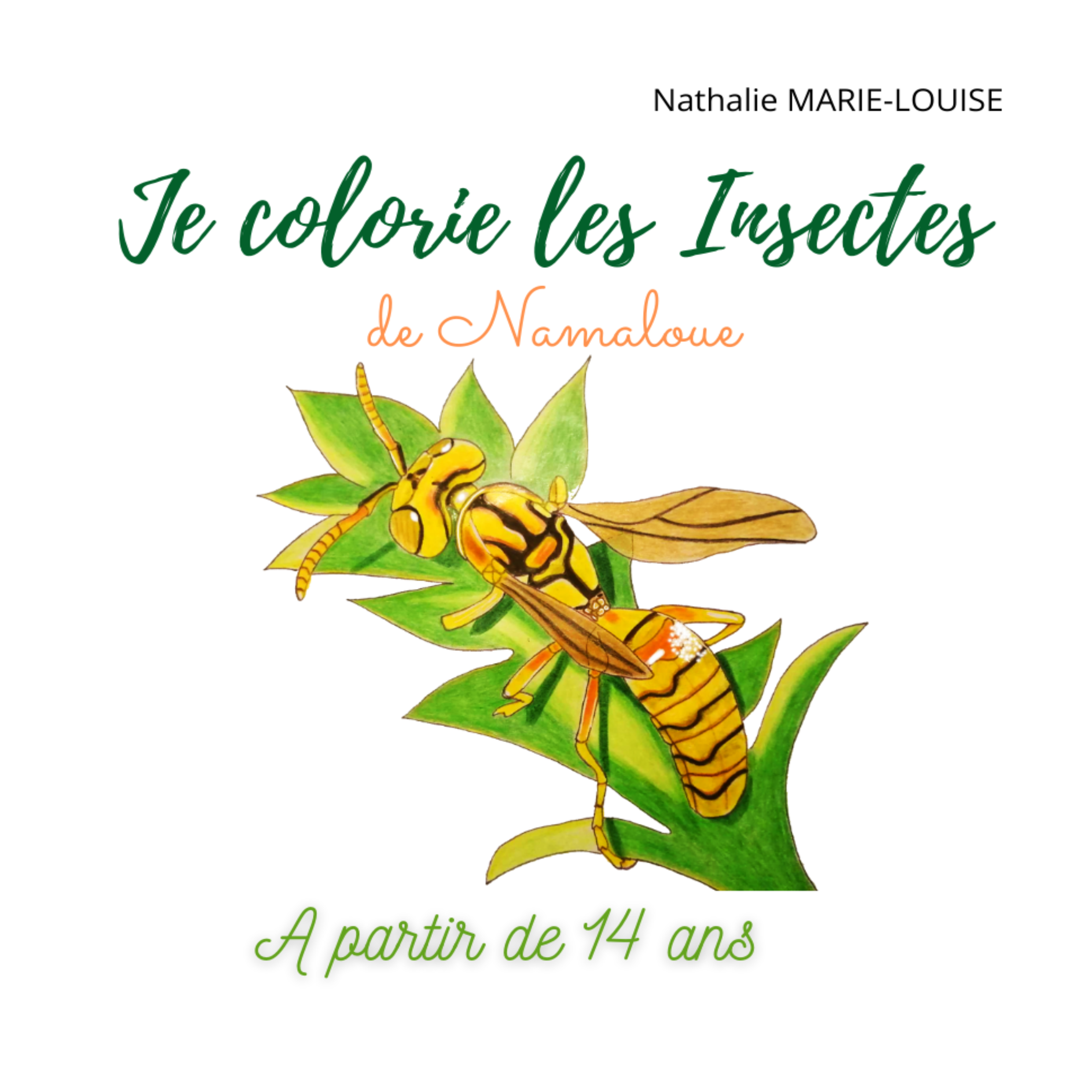 Je colorie les insectes de Namaloue