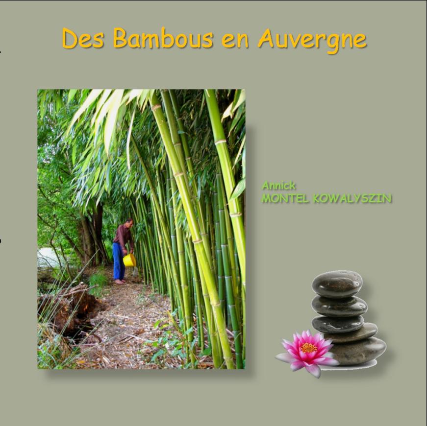 Des Bambous en Auvergne