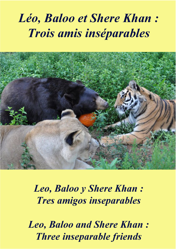Léo, Baloo et Shere Khan