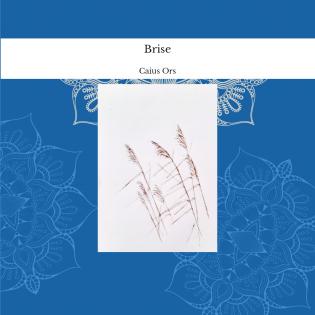 Brise